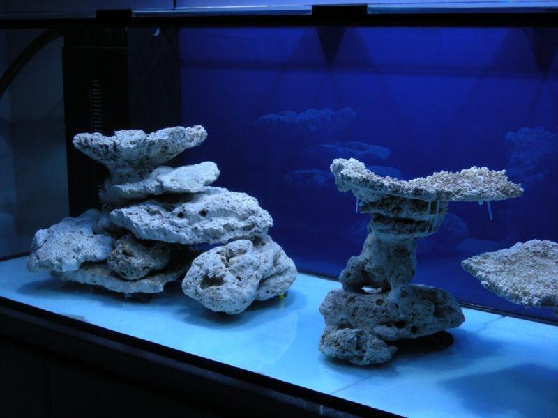 «Композиция из камней в аквариуме» фото - 2 800x600