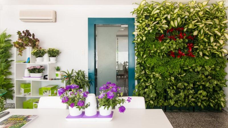 «Вертикальное озеленение в квартире своими руками» фото - 3 2 800x450