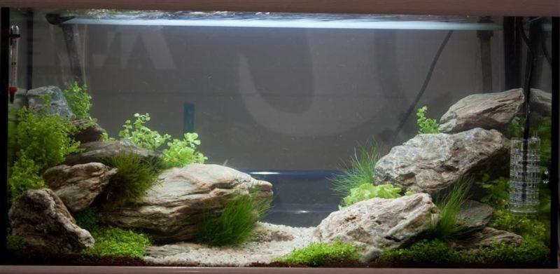 «Композиция из камней в аквариуме» фото - 3 800x391