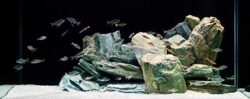 «Композиция из камней в аквариуме» фото - 4 1 800x316