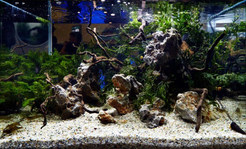 «Композиция из камней в аквариуме» фото - 4 800x486