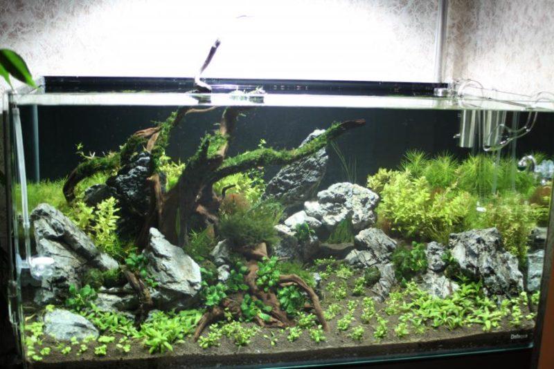 «Композиция из камней в аквариуме» фото - 5 1 800x534