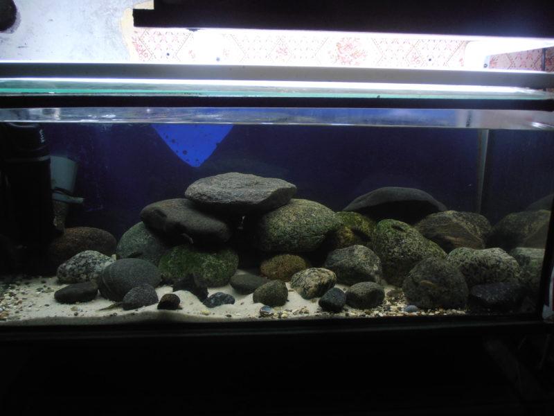 «Композиция из камней в аквариуме» фото - 6 1 800x600