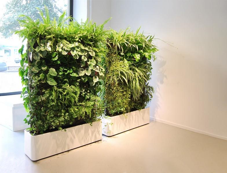 «Вертикальное озеленение в квартире своими руками» фото - 6 2