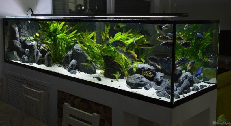 «Композиция из камней в аквариуме» фото - 6 800x438