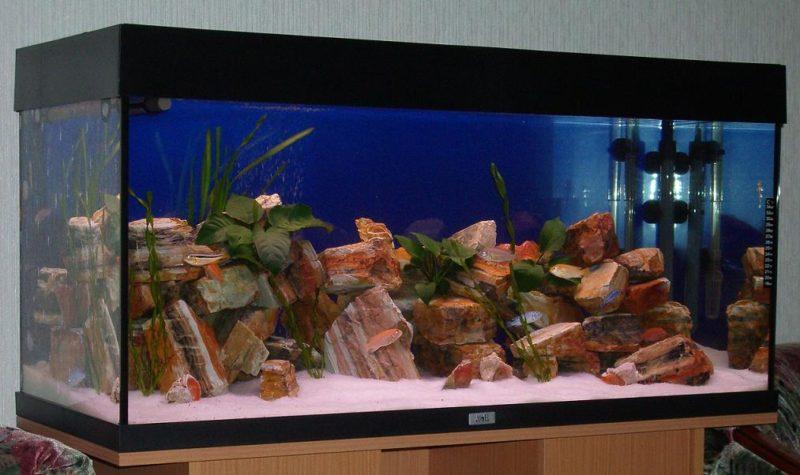 «Композиция из камней в аквариуме» фото - 7 1 800x475