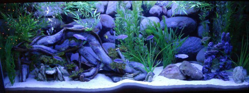 «Композиция из камней в аквариуме» фото - 8 1 800x299