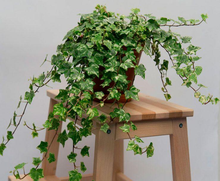 «Вертикальное озеленение в квартире своими руками» фото - Plyushh 7 2