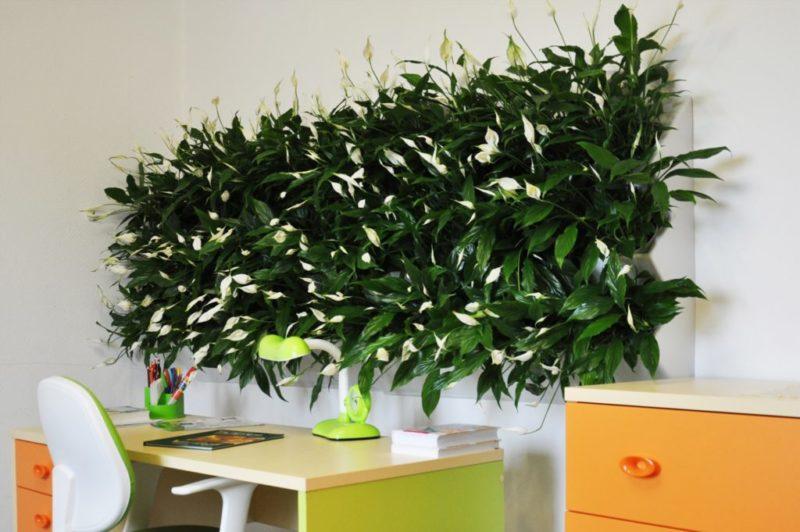 «Вертикальное озеленение в квартире своими руками» фото - fitomodul4 1024x681 800x532