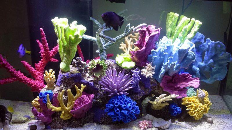 «Композиция из камней в аквариуме» фото - koraly foto 800x450