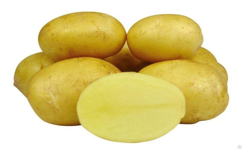 «ТОП-10 лучших сортов картофеля» фото - Kar3 800x493