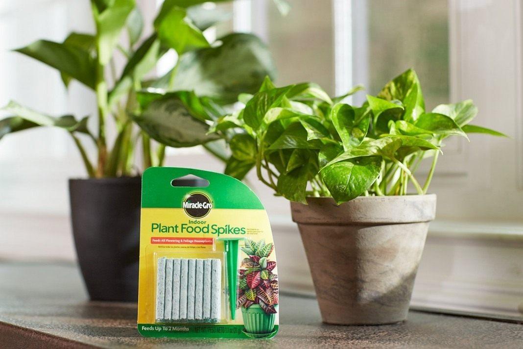 «ТОП-5 лучших удобрений для комнатных растений» фото - houseplant 02