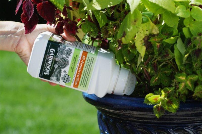 «ТОП-5 лучших удобрений для комнатных растений» фото - houseplant 05 800x533