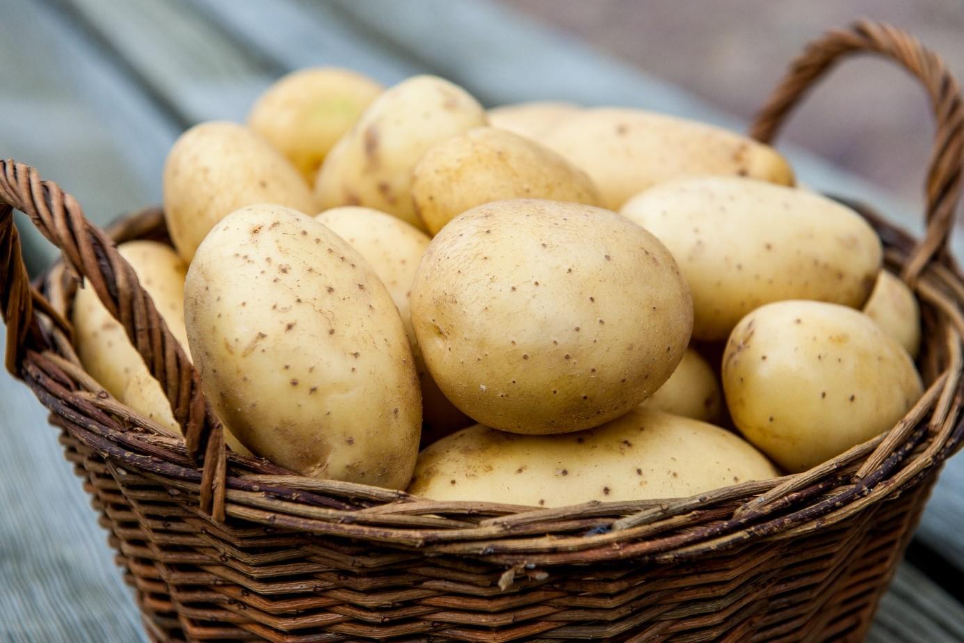 «ТОП-10 лучших сортов картофеля» фото - potato