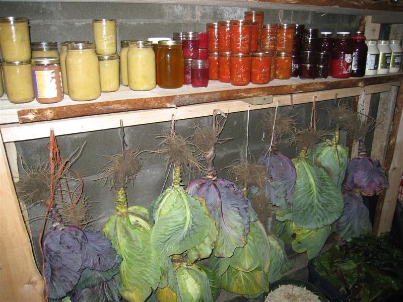 «Как хранить капусту в домашний условиях зимой?» фото - 2685140 800x600