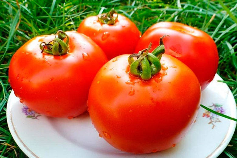 «Томат красным красно f1» фото - harakteristika i opisanie sorta tomatov krasnaya gvardiya f1 16