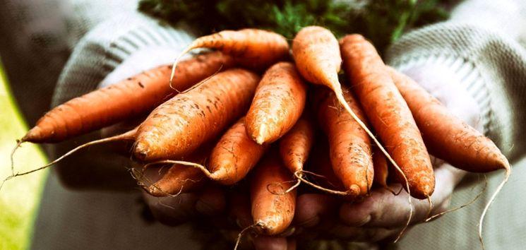 «Когда сажать морковь под зиму?» фото - morkov pod zimu kak i kogda sazhat osenyu