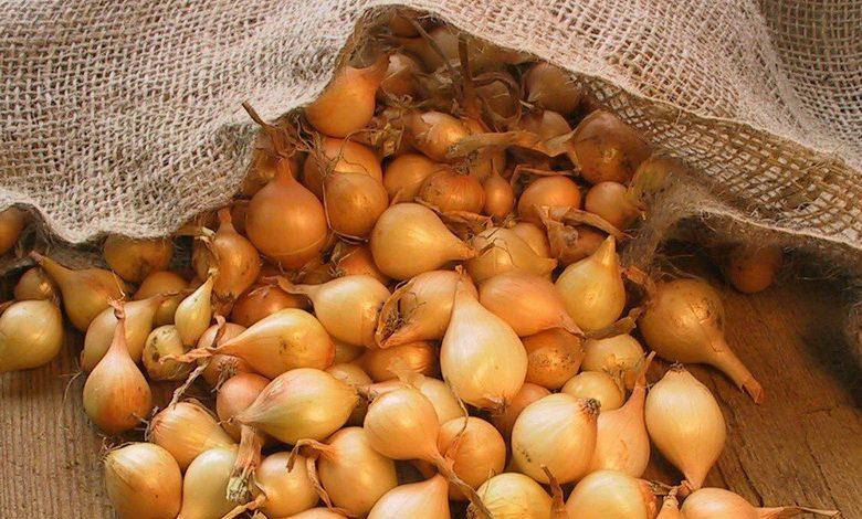 «Посадка лука севка - уход и выращивание» фото - sevokk 1 780x470