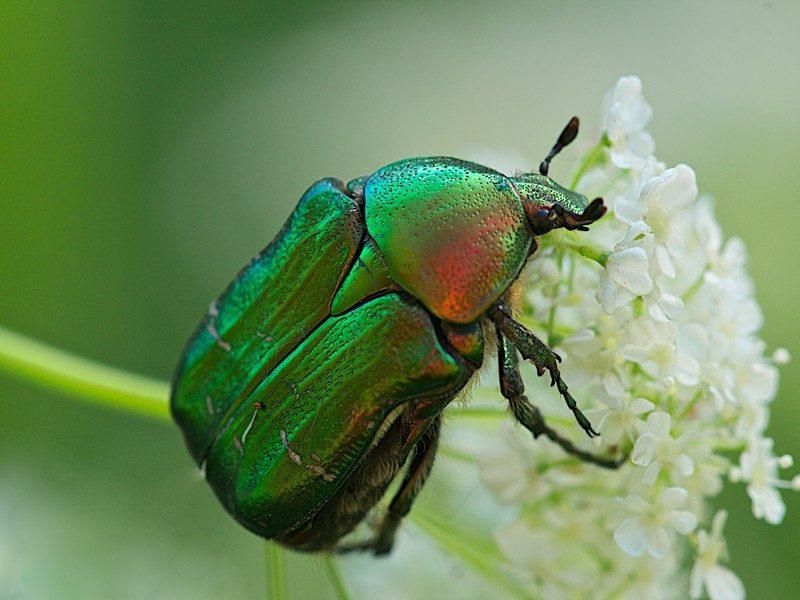 «Личинка майского жука» фото - 12 800x600