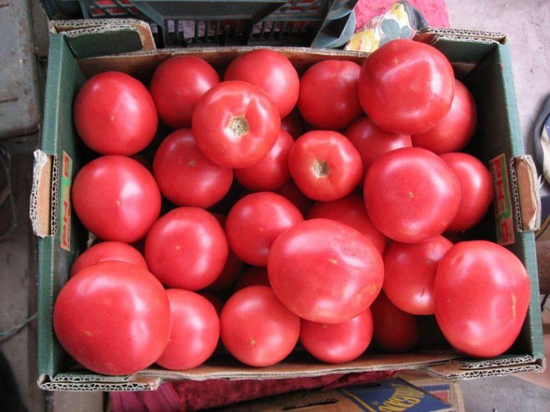 «Выращивание томатов в теплице из поликарбоната» фото - 32451.piuqyc.840 800x600