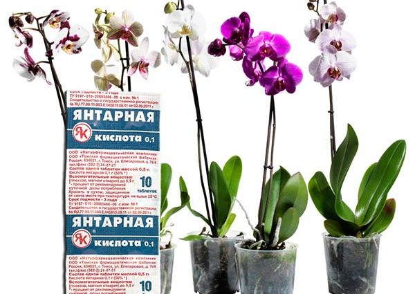 «Янтарная кислота для орхидей» фото - Yantarnaya kislota dlya orhidey polza i vred dlya rasteniy  podkormka i obrabotka 1 1 600x425