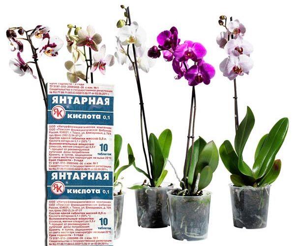 «Янтарная кислота для орхидей» фото - Yantarnaya kislota dlya orhidey polza i vred dlya rasteniy  podkormka i obrabotka 1 1 600x500