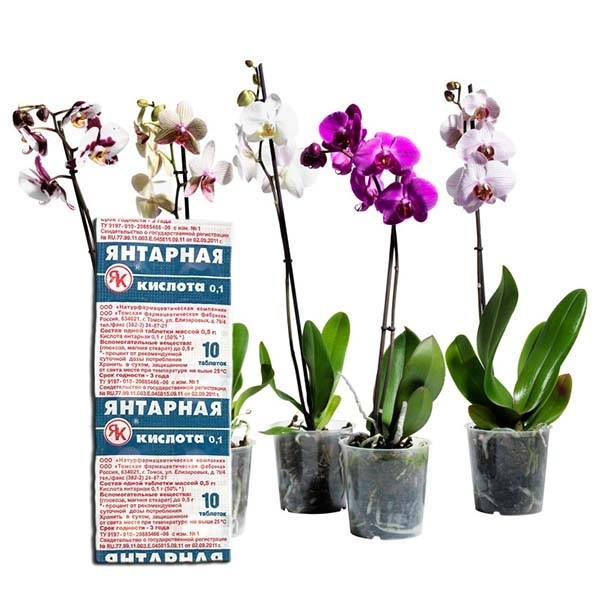 Янтарная кислота для орхидей в таблетках: как применять и разводить.