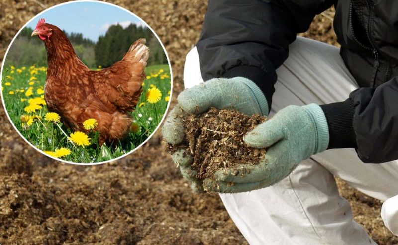 «Куриный помет как удобрение» фото - kurinyj pomet 1 800x492