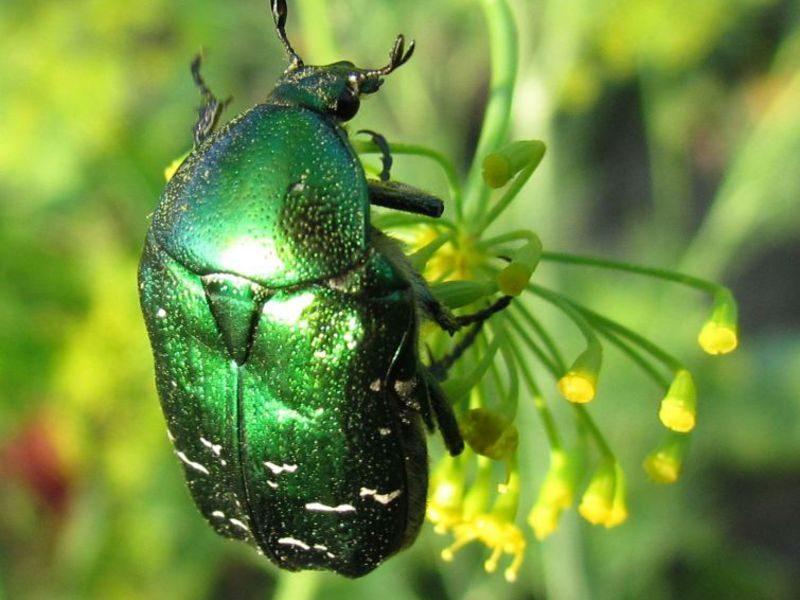 «Личинка майского жука» фото - original 800x600