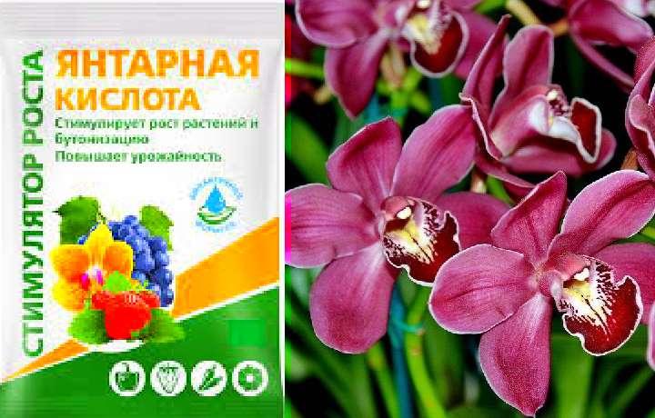 «Янтарная кислота для орхидей» фото - poliv orhidej yantarnoj kislotoj