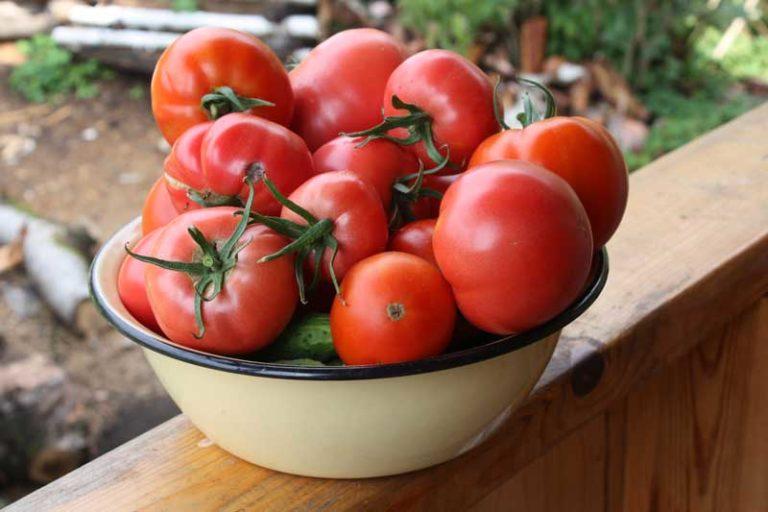 «Выращивание томатов в теплице из поликарбоната» фото - sortott2
