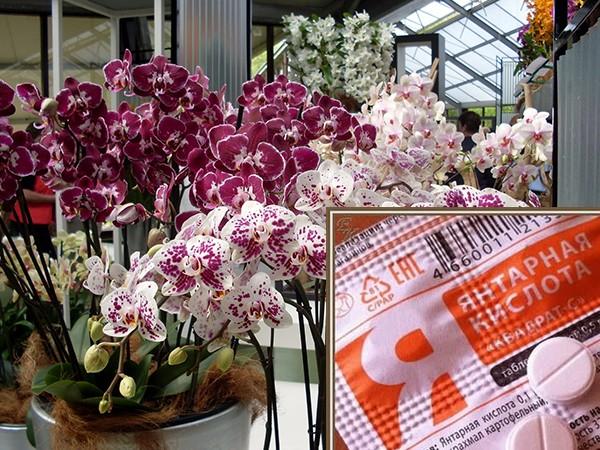 «Янтарная кислота для орхидей» фото - stimulyator rosta dlya rastenij