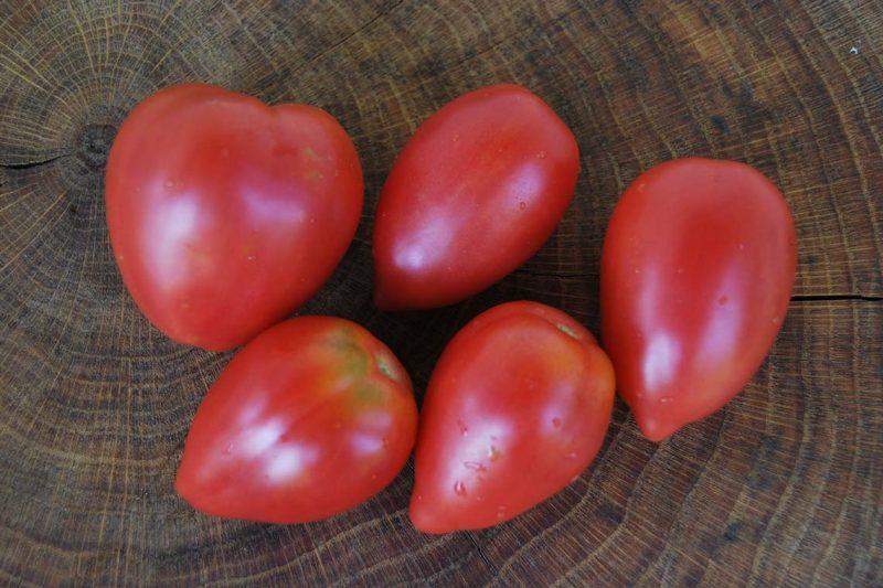 «Выращивание томатов в теплице из поликарбоната» фото - tomat rozovyj flamingo 1 800x533