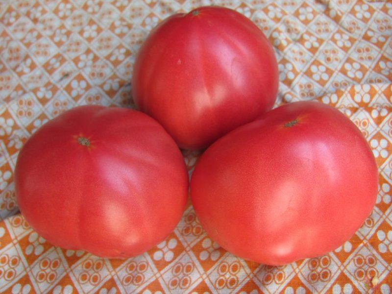 «Выращивание томатов в теплице из поликарбоната» фото - user1579 pic107943 1353227802 800x600