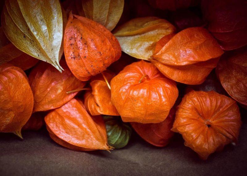 «Физалис - описание, полезные свойства, выращивание» фото - 1525182394 fruit physalis autumn leaf still life food 2908594 800x571