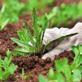 «Гербициды от сорняков» фото - 204b0b5505c4ef07b3501507e2c38e21 120x120