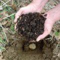 «Удобрение для картофеля при посадке в лунку» фото - 27065.phvv9c.840 120x120