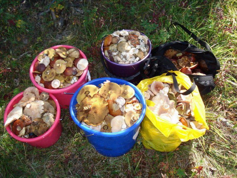 «Как вырастить грибы на садовом участке?» фото - 58765 main 800x600