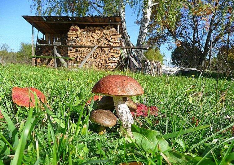 «Как вырастить грибы на садовом участке?» фото - bs gribi doma virachivanie 1 e1506687701681