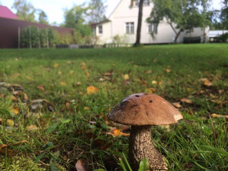 «Как вырастить грибы на садовом участке?» фото - c8f944as 960 800x600