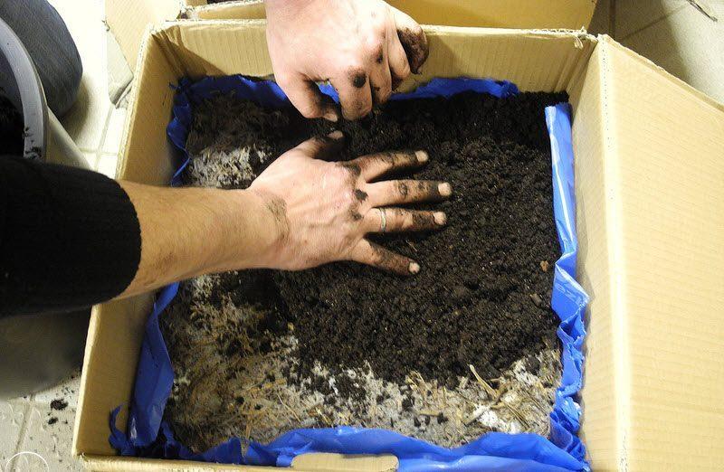 «Как вырастить грибы на садовом участке?» фото - substrat e1478002588154 800x522