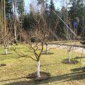 «Обработка сада осенью от болезней и вредителей» фото - 1 138 120x120