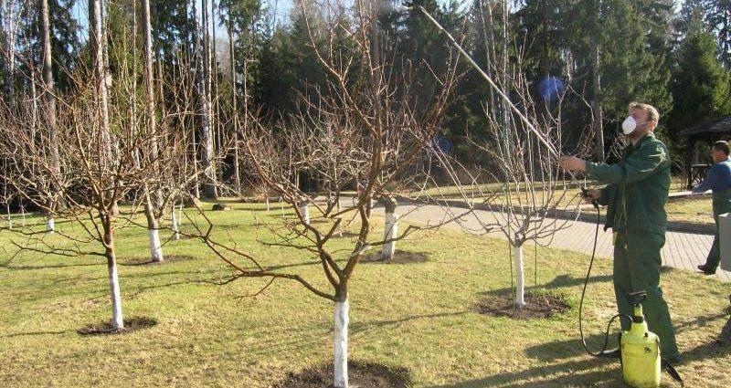 «Обработка сада осенью от болезней и вредителей» фото - 1 138 800x425