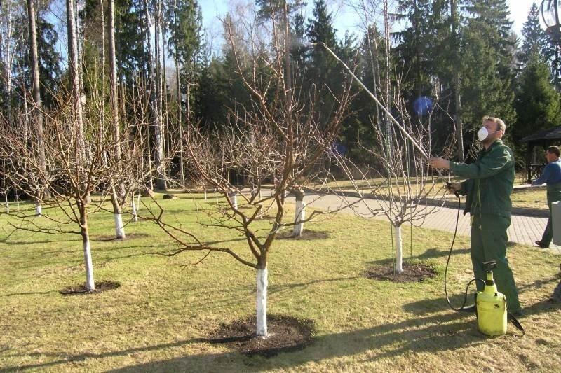 «Обработка сада осенью от болезней и вредителей» фото - 1 138