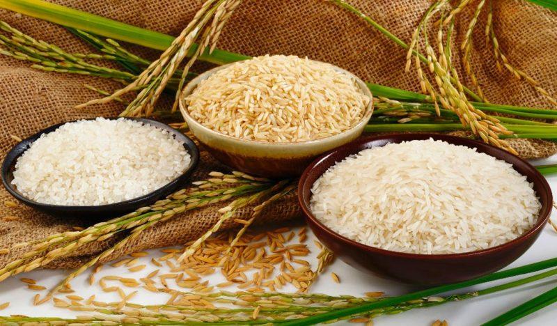 «Как растет рис?» фото - 1 6 800x468