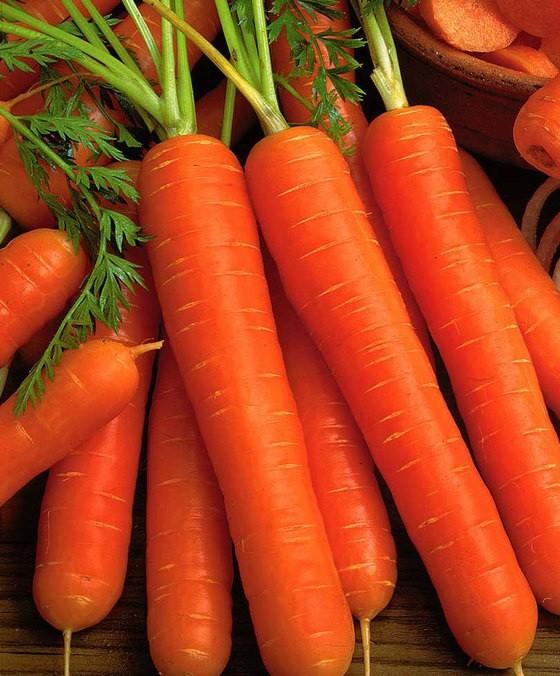«Когда сажать морковь семенами в открытый грунт?» фото - 16760 01 BAKIE 20120504194500