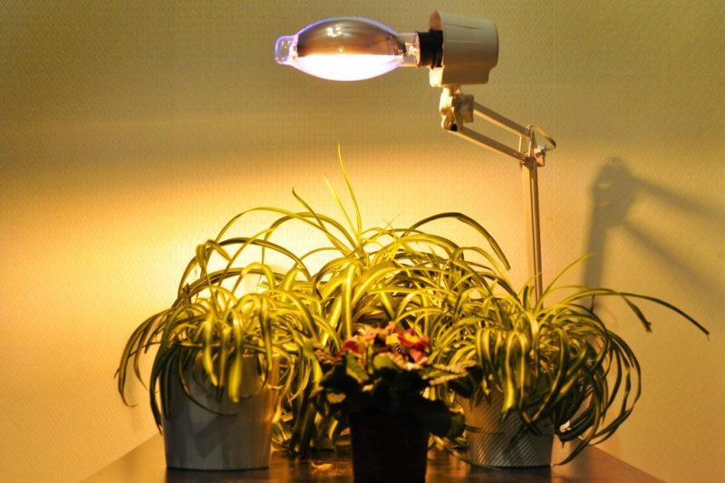 «Лампа для рассады» фото - 5 9 800x533