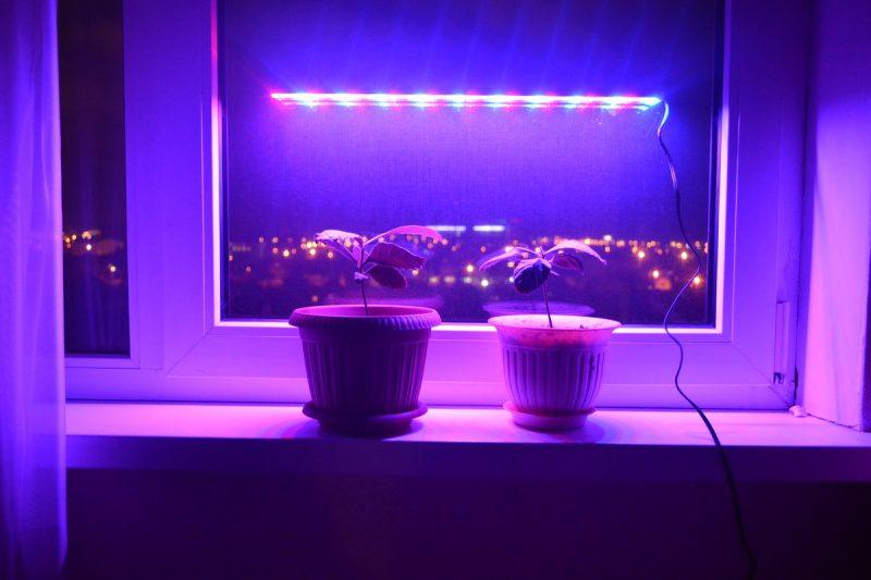 «Лампа для рассады» фото - 501 800x533