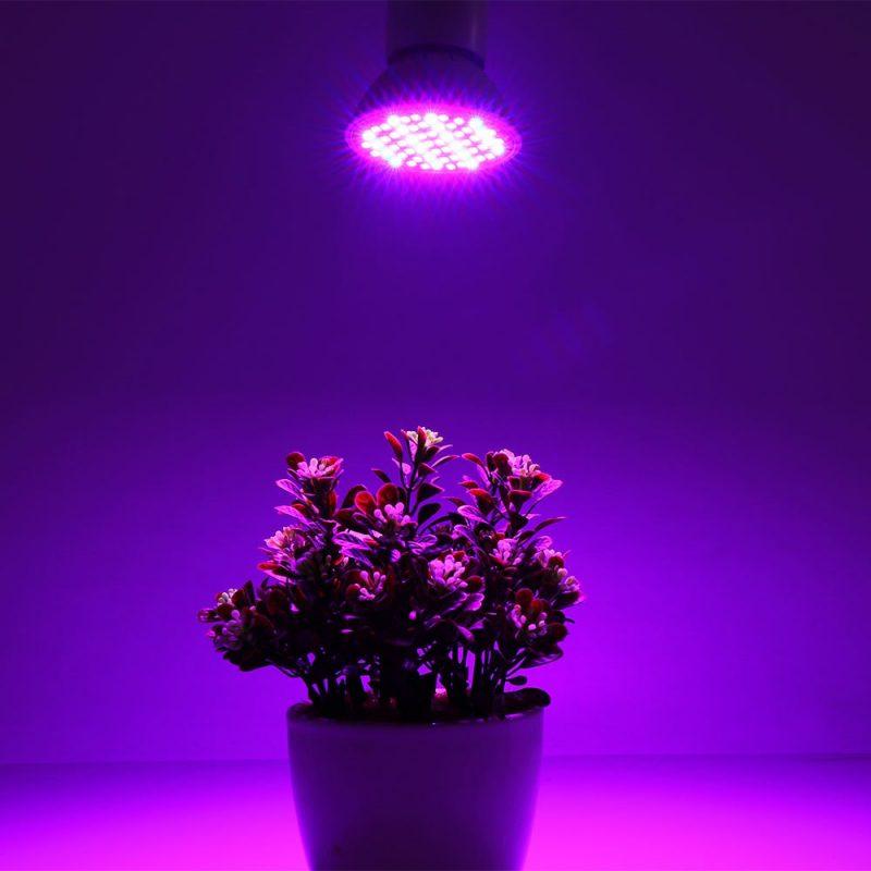 «Лампа для рассады» фото - 60 E27 AC85 265V 800x800