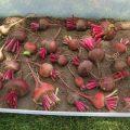 «Как хранить капусту в домашний условиях зимой?» фото - Zakladka svekly na hranenie 120x120